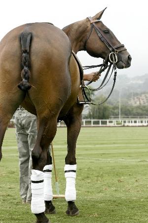Polo Für Pferd Und Reiter Eine Anspruchsvolle Sportart Fit Und